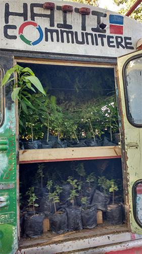 bus-haiti-trees_0001_IMG-20170127-WA0001.jpg