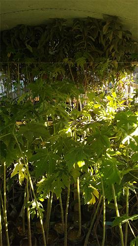 bus-haiti-trees_0004_IMG-20170127-WA0005.jpg