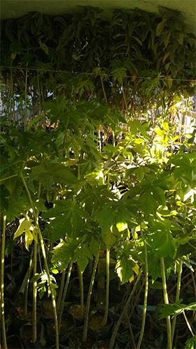 bus-haiti-trees_0005_IMG-20170127-WA0006.jpg