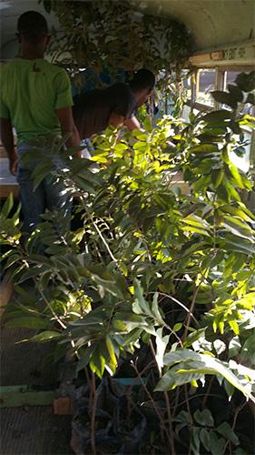 bus-haiti-trees_0007_IMG-20170127-WA0008.jpg